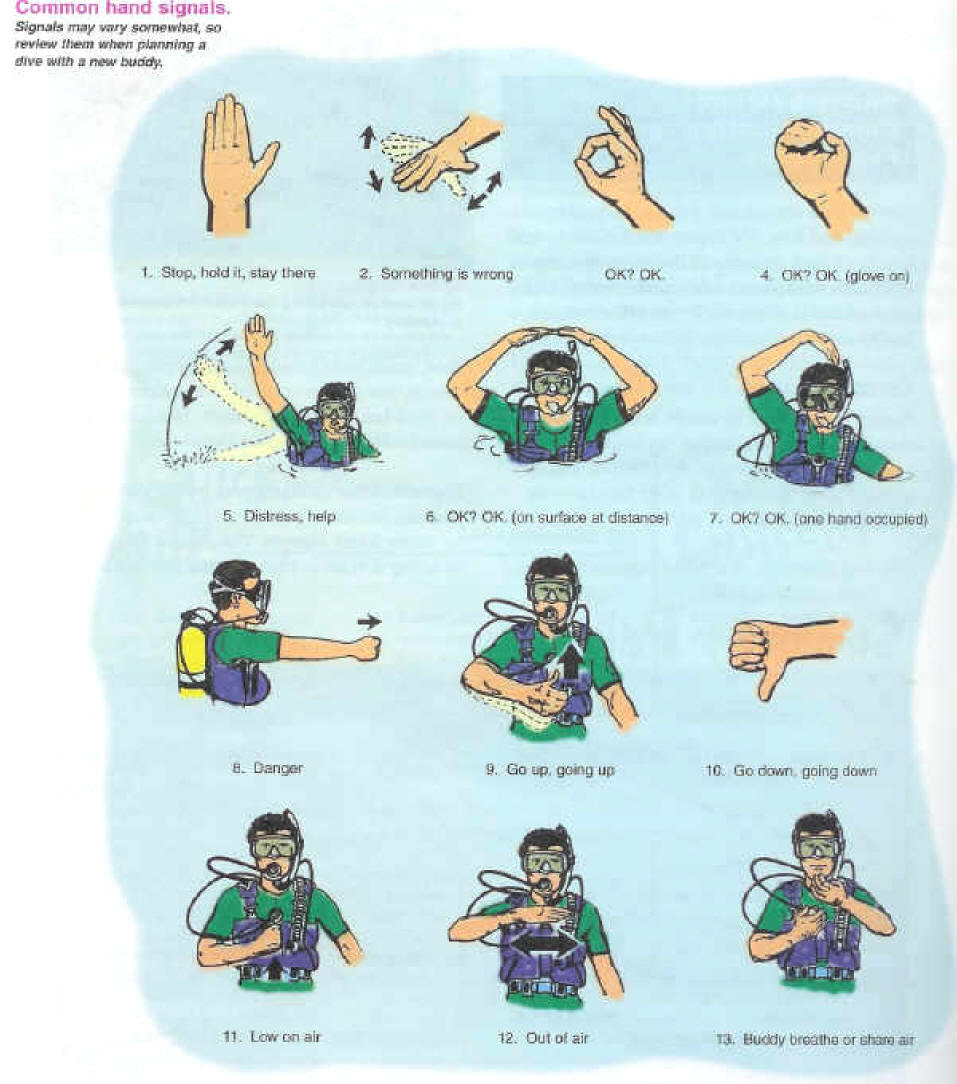 Scuba Diving Hand Signals PADI and Underwater Gestures